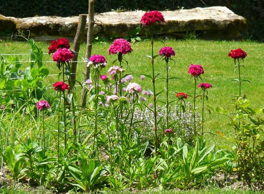 Notre jardin secret promenade au jardin for Au jardin secret