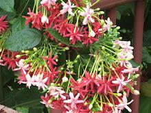Flowers?