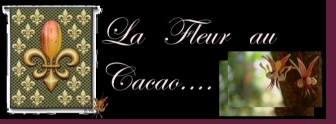 la fleur au Cacao....