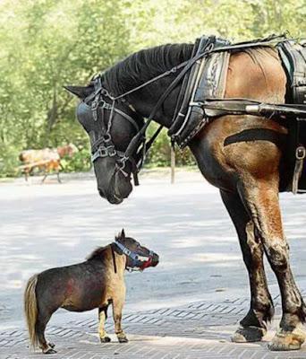 kuda_besar_Kuda_kecil