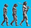 manusia_purba_Paranthropus_Transvaalensis