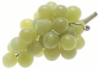 gambar_besar_buah_anggur_hijau