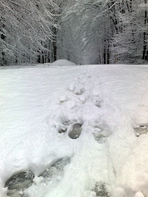 snow, tracks