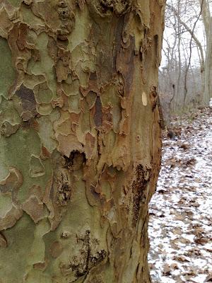tree, bark