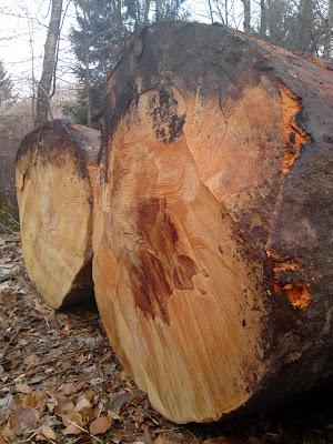 logs, woods