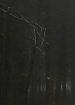 darkness, woods