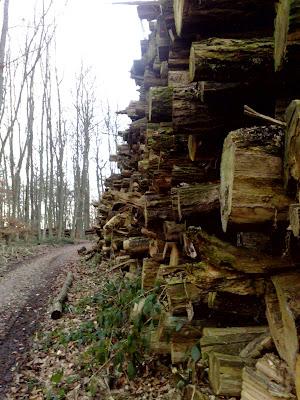 timber, woods