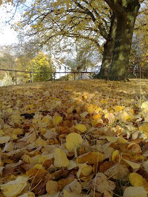 fallen leaves,