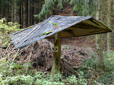 woods, shelter