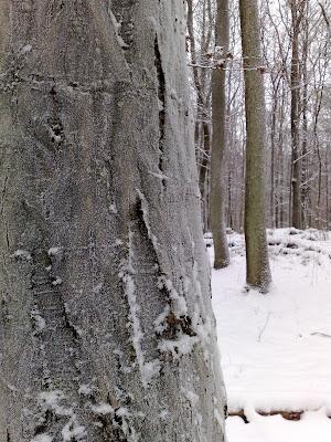 frost,  bark, snow