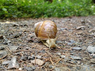 snail, woods