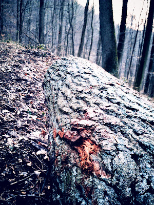 logs, twilight,
