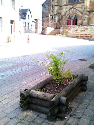 plants, street