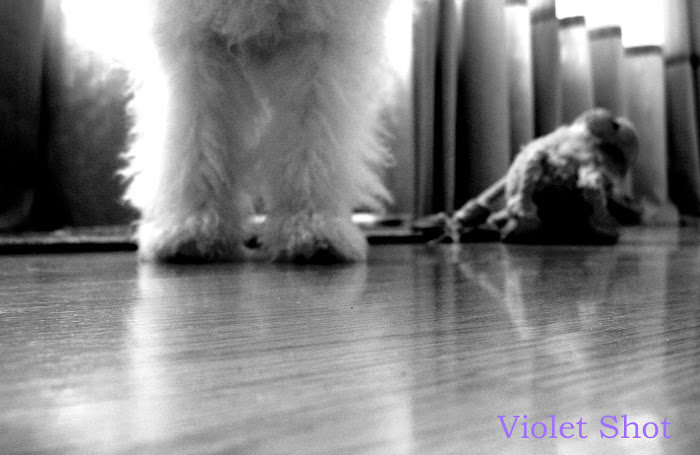 Violet Shot