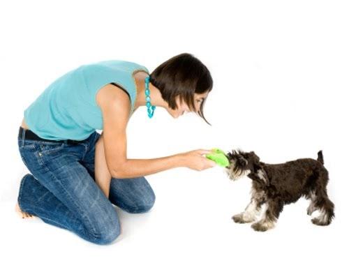Natural Dog Training Pushing