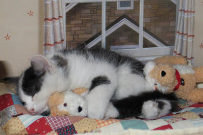 4 Cute Kittens Sleeping in a Drawer  iranlivetvcom