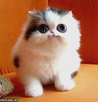 Anak kucing (idaman) saya...