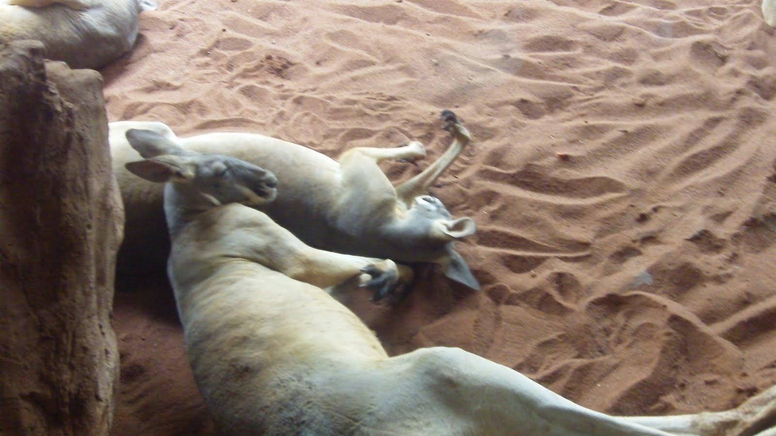 Cassowary attack victim - photo#8