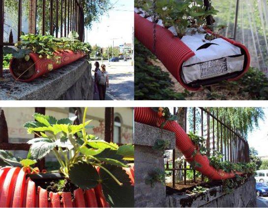 Grupos de consumo agroecol gico jardines peculiares for Jardines bonitos y economicos