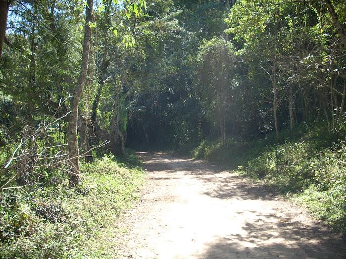 Estrada da Cascata