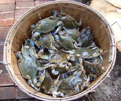 Poor little crabbies!