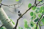 Birds du Jour