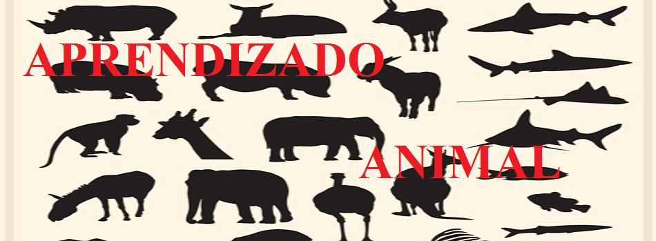 Tudo sobre os animais
