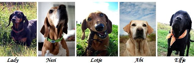 Onze honden stellen zich voor: Klik op de onderstaande afbeelding