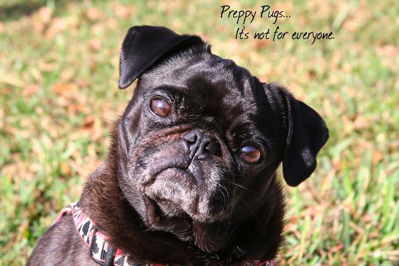 Preppy Pugs