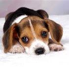 Os 10 cachorros mais amigáveis para a família