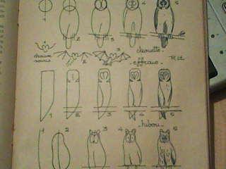 Dessins astuces pour debutants dessiner une chouette - Chouette a dessiner ...