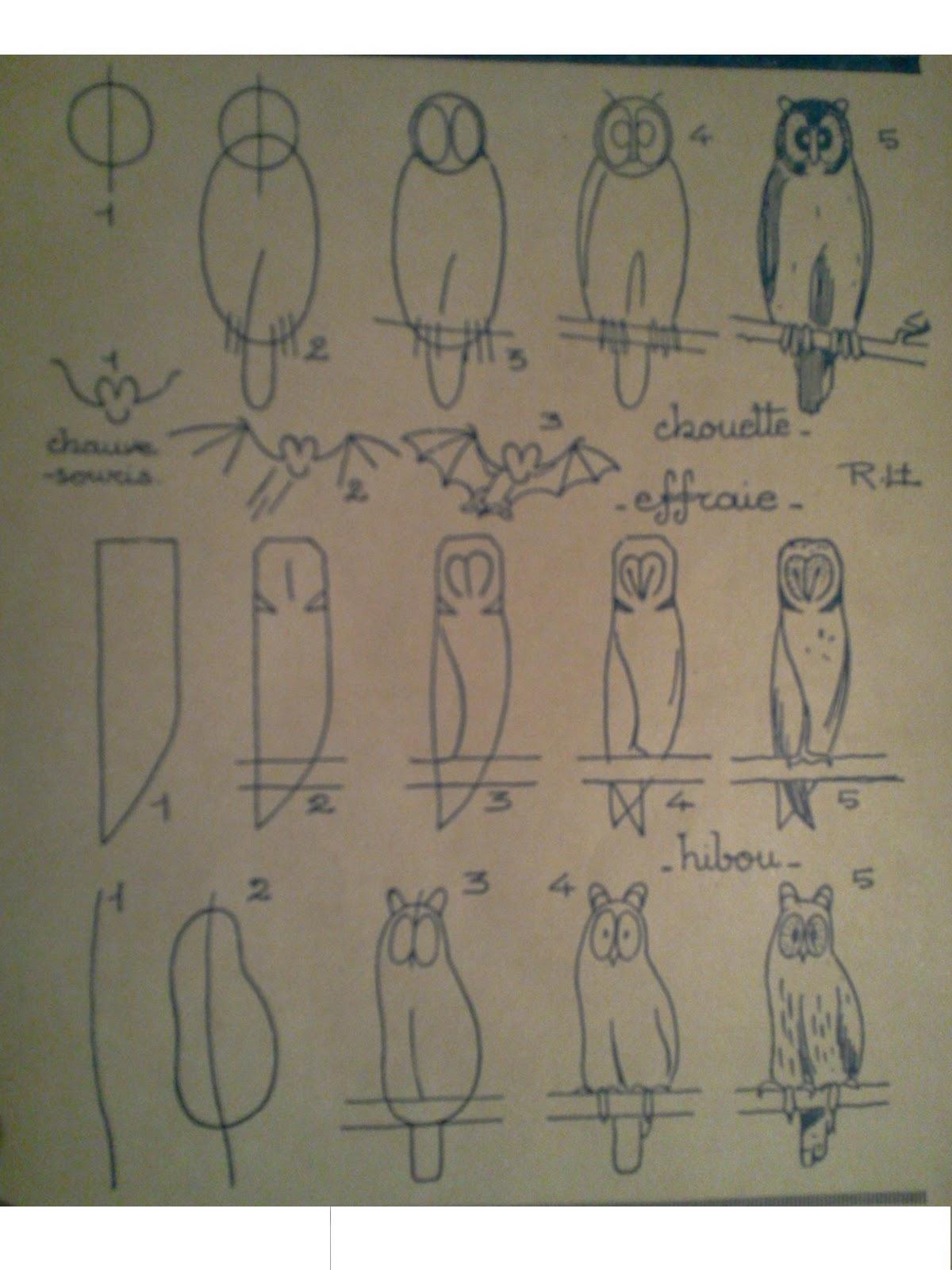 Dessins astuces pour debutants dessiner chouette hibou chauve souris - Chouette a dessiner ...