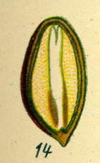 Pinjola
