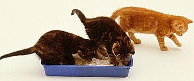 how to take care of 5 week old kittens