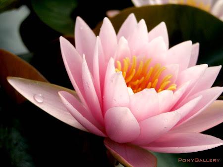 มทร. ธัญบุรี จัดประกวดบรรจุภัณฑ์ 'ชมดอกบัวบาน ทานอาหารจากบัว' 6-8 สิงหาคม 2553