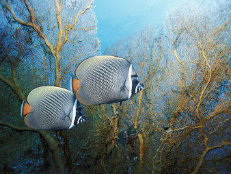 #13 Fish Wallpaper