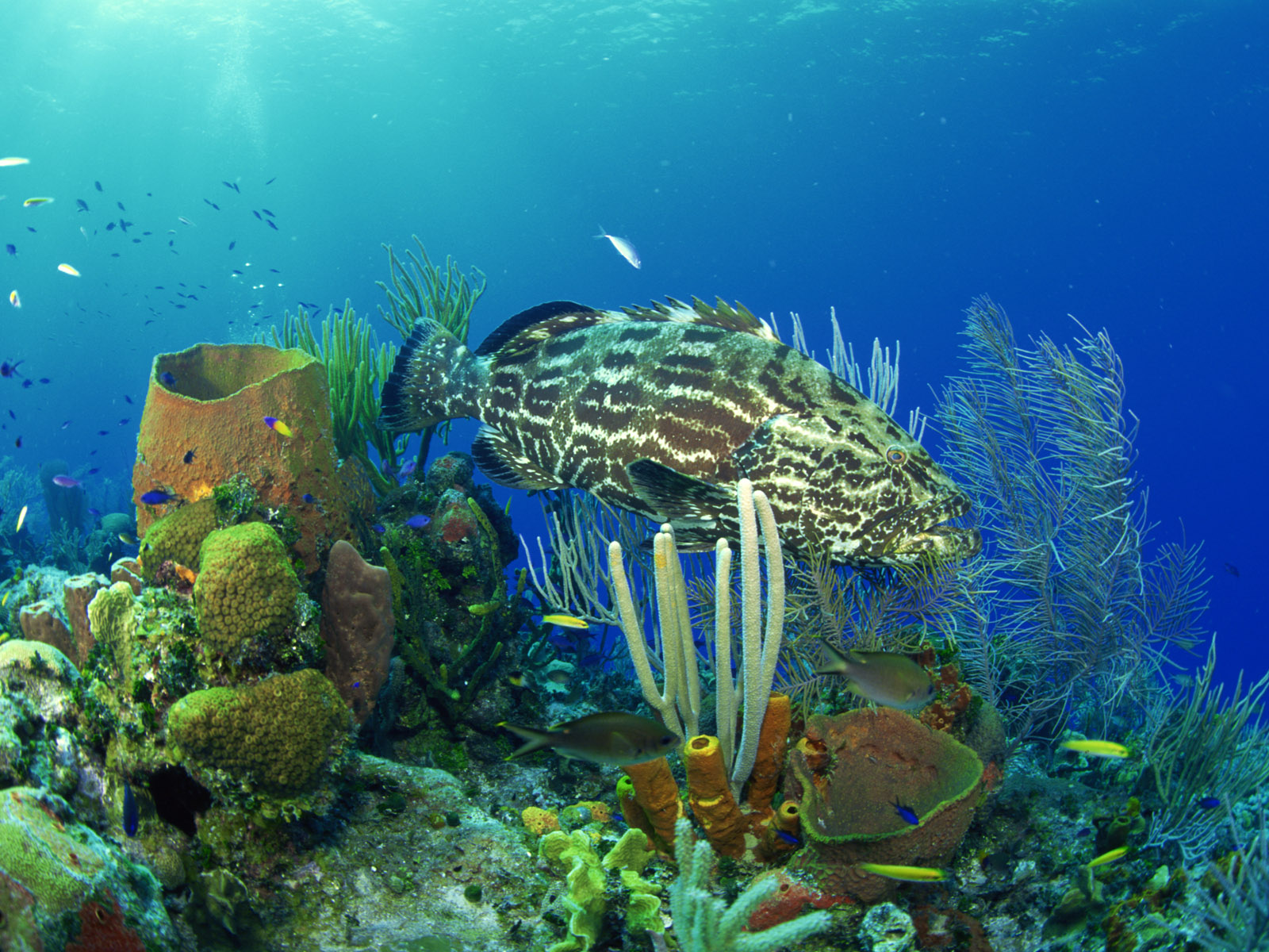 nature coral underwater landscape - photo #15