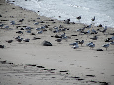 Birds on Bryher