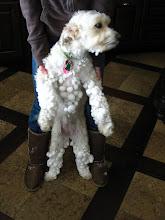 Molly's snowballs