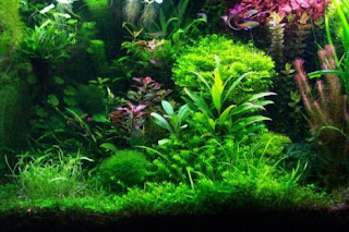 mein juwel delta 100 aquarium. Black Bedroom Furniture Sets. Home Design Ideas
