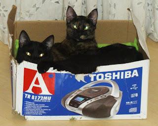 gatos numa caixa