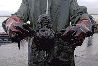 ave coberta de petróleo