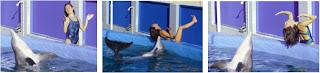 golfinho imita gestos humanos