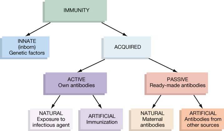 types+of+immunity.jpg