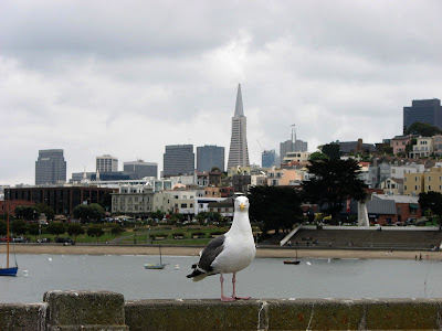 A gull checks out the photographer