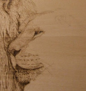 lioness pyrography in progress