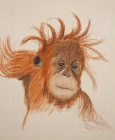 baby orangutan sketch for drawing day