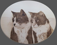 house cat pyrography portrait drawing commission