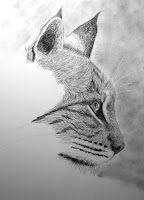bobcat charcoal drawing in progress