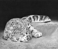 snow leopard charcoal drawing